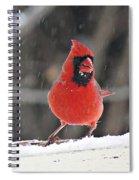 Cardinal In Snowstorm Spiral Notebook