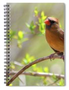 Cardinal In Spring Spiral Notebook