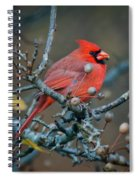 Cardinal In The Berries Spiral Notebook