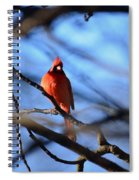 Cardinal In The Midst Spiral Notebook