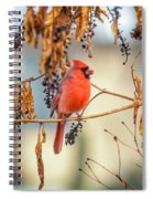 Cardinal In The Pokeberries Spiral Notebook