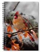Cardinal In The Rain Spiral Notebook