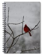 Cardinal In The Snow Spiral Notebook