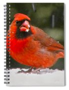 Cardinal In The Snowstorm Spiral Notebook