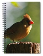 Cardinal Light Spiral Notebook
