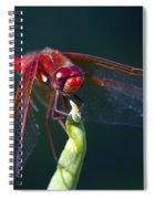 Cardinal Meadowhawk Dragonfly Spiral Notebook