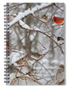Cardinal Meeting In The Snow Spiral Notebook