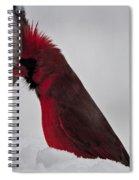 Cardinal 1 Spiral Notebook