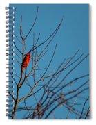 Cardinal Morning Spiral Notebook
