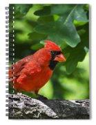 Cardinal Red Spiral Notebook
