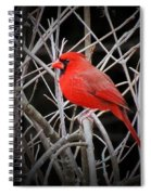 Cardinal Red With Black Spiral Notebook