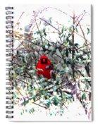 Cardinal Stare Spiral Notebook