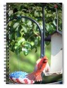 Cardinal Tail Wide Landing Digital Art Spiral Notebook
