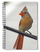 Cardinal Young Female Spiral Notebook