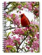 Cardinally Beautiful Spiral Notebook