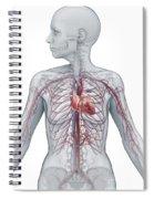 Cardiovascular System Female Spiral Notebook