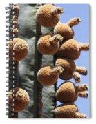 Cardon Cactus Fruit Spiral Notebook