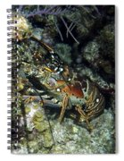 Caribbean Reef Lobster On Night Dive Spiral Notebook