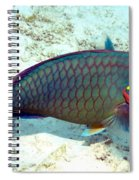 Caribbean Stoplight Parrot Fish In Rainbow Colors Spiral Notebook