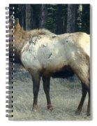 Elk Side Profile - Banff, Alberta Spiral Notebook