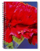 Carnation Carnation Spiral Notebook