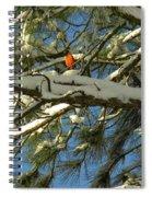 Carolina Cardinal Spiral Notebook