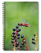 Carolina Saddlebags Spiral Notebook