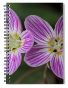 Carolina Spring Beauty Duo Spiral Notebook