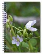 Carolina Spring Beauty - Wide-leaved Spring Beauty - Claytonia Caroliniana Spiral Notebook