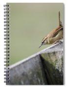 Carolina Wren Two Spiral Notebook