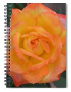 Caroty Splendor - Rose Spiral Notebook