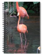 Cartoon - A Flamingo In The Small Lake In Their Exhibit In The Jurong Bird Park Spiral Notebook