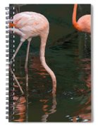 Cartoon - A Flamingo With Its Head Under Water In The Jurong Bird Park Spiral Notebook