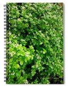 Cascading Fleabane Spiral Notebook