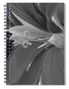 Cascading Ivy Geranium Named Decora Fire Spiral Notebook