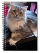 Cat And Keyboard Spiral Notebook