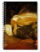 Cat Catnapping Spiral Notebook