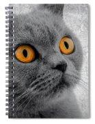 Cat Eyes Spiral Notebook