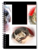 Cat Family Spiral Notebook