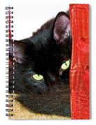 Cat Hiding Behind Drapes Spiral Notebook