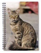 Cat In Aegina Island Spiral Notebook