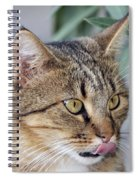 Cat In Athens Spiral Notebook