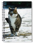Cat In The Snow Spiral Notebook