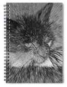 Cat - India Ink Effect Spiral Notebook