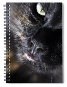 Cat Looking Up Spiral Notebook