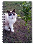 Cat 'n Orange Tree Spiral Notebook