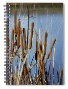 Cat Nine Tails Spiral Notebook