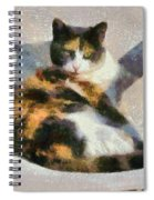 Cat On Chair Spiral Notebook