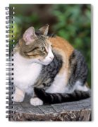 Cat On Tree Trunk Spiral Notebook
