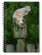 Cat Perched On A Bird House Spiral Notebook